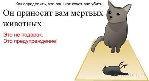 Как определить что кошка хочет вас убить