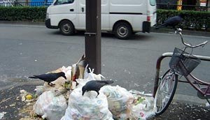 Японец выбросил в мусор 70 тыс. евро