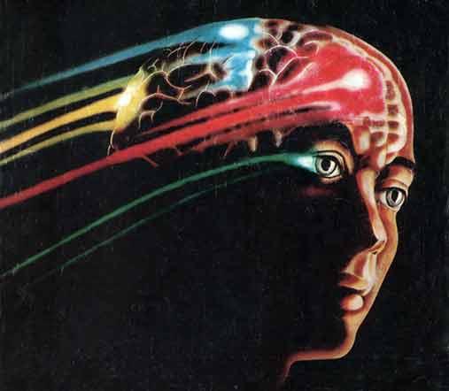 Срок жизни зависит от размера мозга
