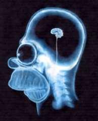 Женщина с половиной мозга