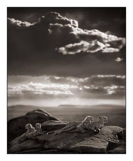 Nick Brandt (United Kingdom)