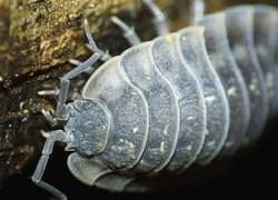 Секретным ингредиентом кока-колы оказались гусеницы