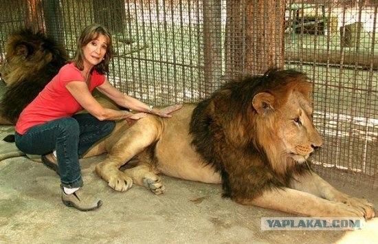 Зоопарк для смелых