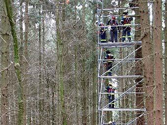 Самоубийца провисел 29 лет на дереве