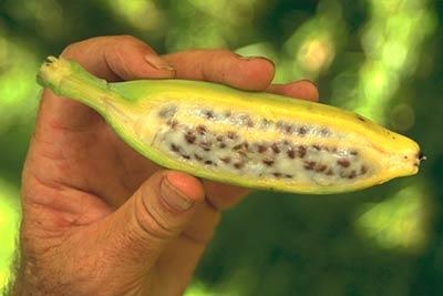 Что Вы знаете про бананы?