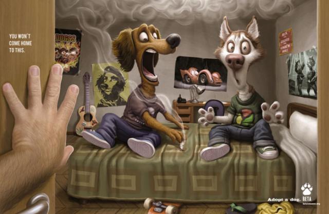 Возьмите из приюта взрослую собаку!