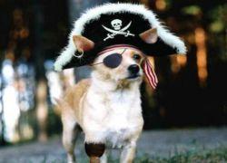 Пиратство и авторские права - что сильнее?