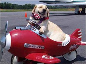 В США появились первые в мире авиалинии для домашних животных