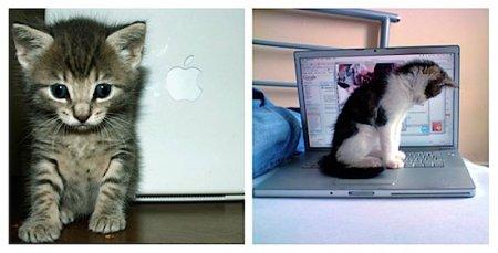 Коты и Маки