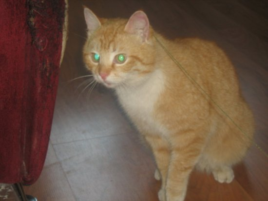 Пропал кот по улице Харьковская!