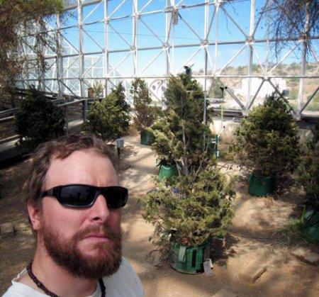 Лёгкое потепление убило все деревья в эксперименте