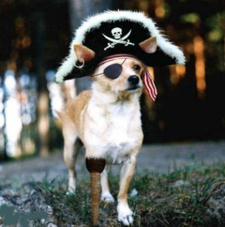 Торренты - пиратство или нет?