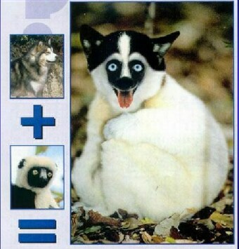Новые виды животных