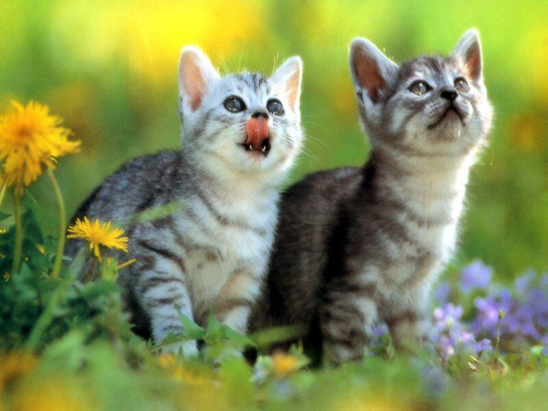Картинки кошек и котят смешные 3