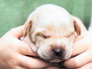 В Англии мальчик смыл грязного щенка в унитаз