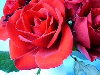 Суд обязал турка 5 месяцев дарить жене цветы