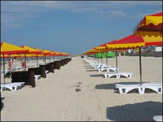 Пляжам Херсонской области угрожает сибирская язва