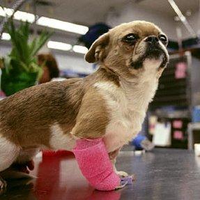 Раненые животные