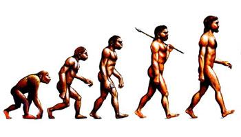 Человек прекратил эволюцию