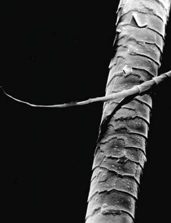 На волоске от провала: Предательские изотопы