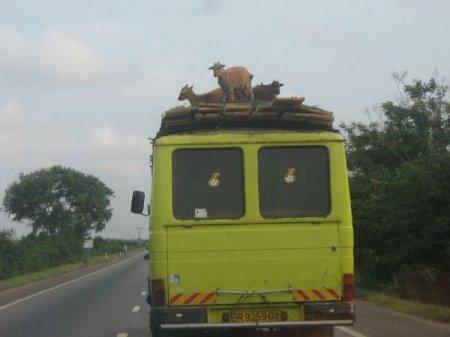 Это Африка, чувак!