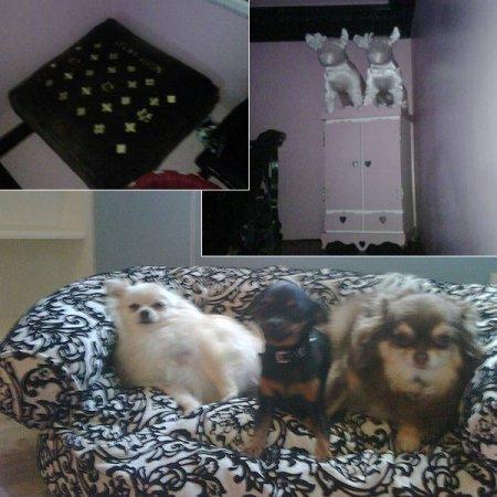 Домик для собачки Пэрис Хилтон