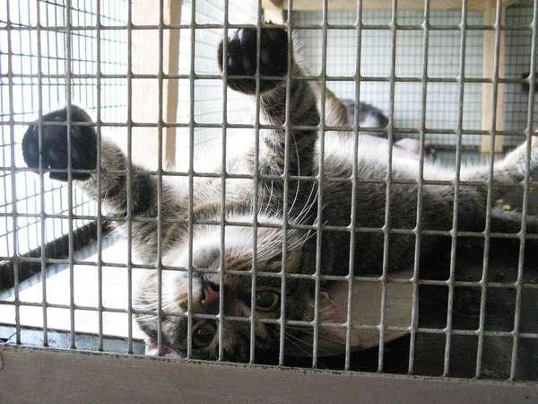 Директор столичного ЖЭУ-82 получила двое суток ареста за жестокое обращение с животными