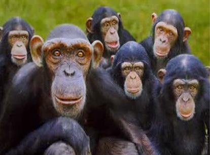 Из английского зоопарка сбежали 30 обезьян