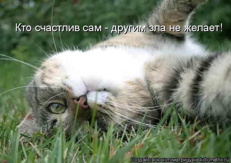 Котоматрицы-4