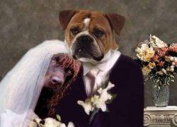 Жительница Ганы вышла замуж за собаку