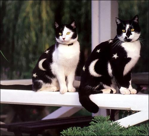 Гламурные котики!