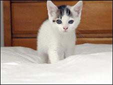 Кошки манипулируют людьми?