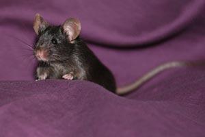 Мышь из пальца