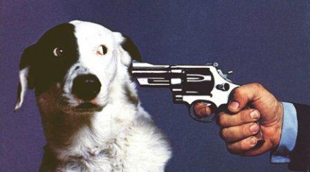 Любовь к собакам может закончиться операцией