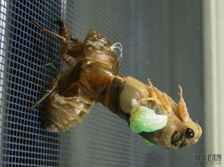 Превращение жука