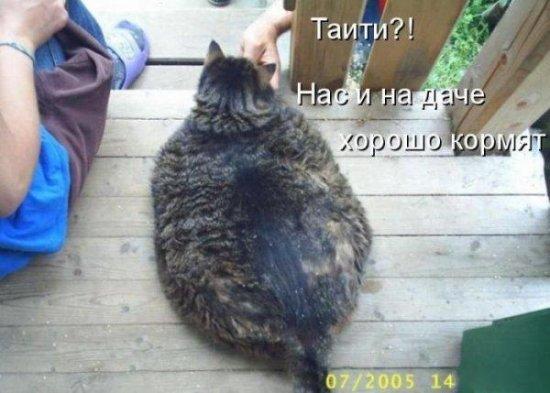 ������� ��������
