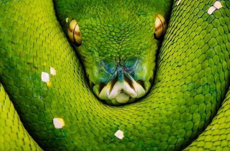 Лучшие фото National Geographic