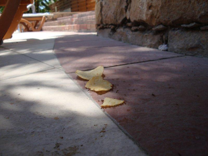 Как муравьи отмечали пятницу (26 фото)