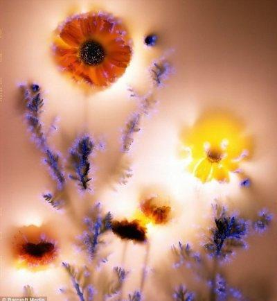 Уникальные фото от Roberta Buelteman`a
