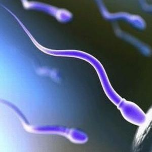 Чем лучше сперма, тем длиннее жизнь