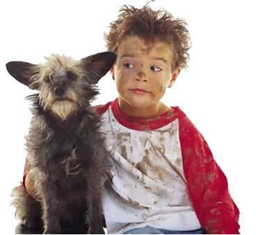 Как выгулять собаку и не нарушить законодательство?