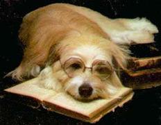 Раздатчики сосисок поискали теорию разума в головах собак