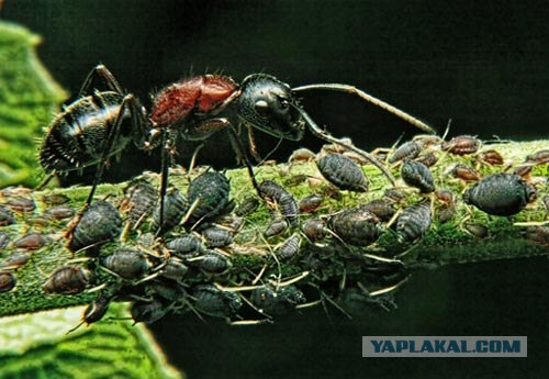 10 самых невероятных муравьиных фактов