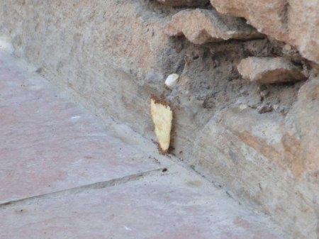 Муравьи и чипсы