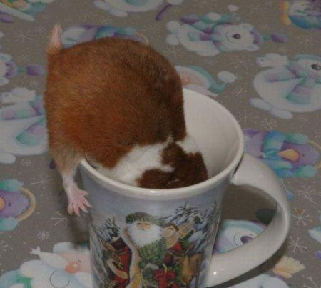 Завтрак хомячка