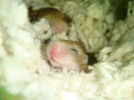 Малышня