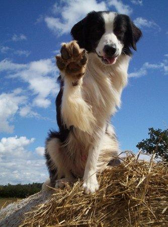 """Канадские учёные составили рейтинг """"умнейших"""" пород собак"""