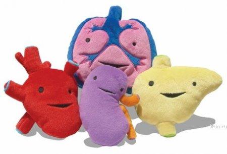 Есть ли у вас лишние органы?