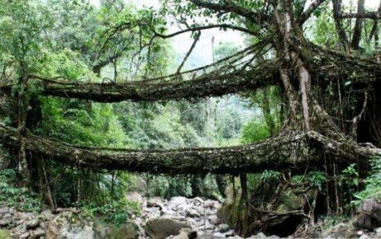 Живой мост