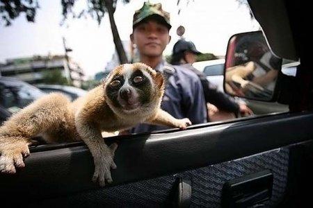 Дикие животные стремятся в город